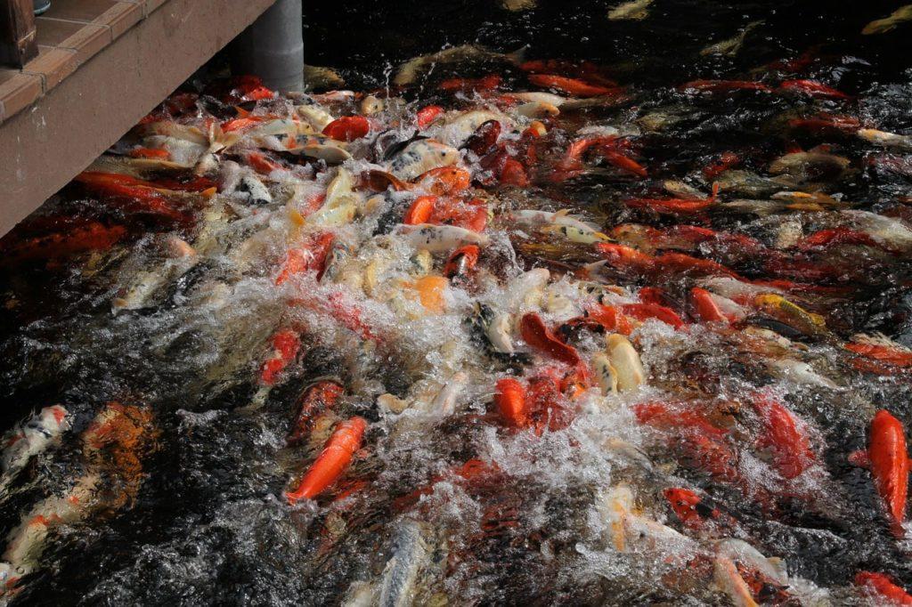 Куда сбыть рыбу