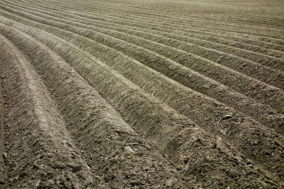 Бизнес-план производство картофеля