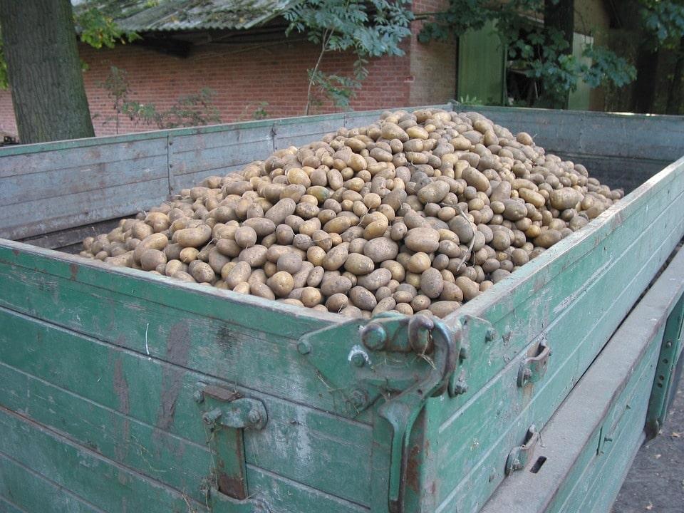 Отзывы предпринимателей о бизнесе на картофеле