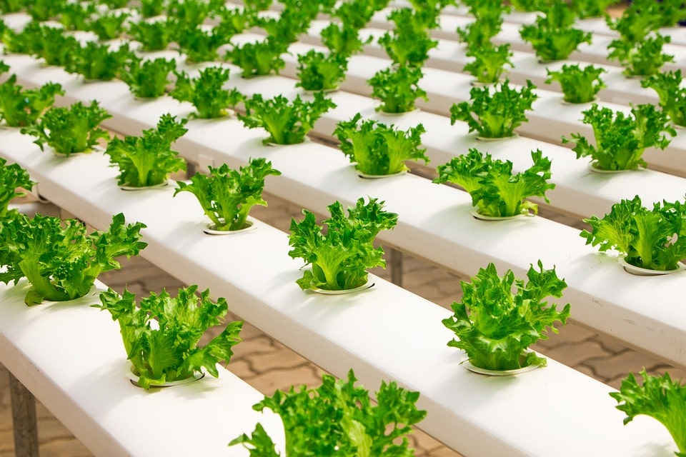 Выращивание в теплице методом гидропоники