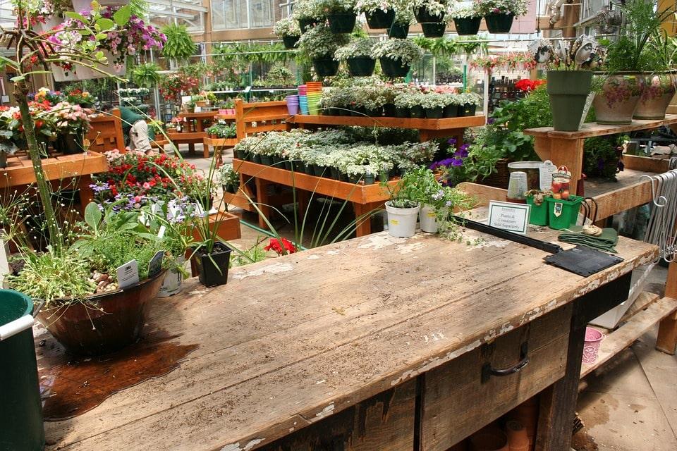 Бизнес на растениях в квартире