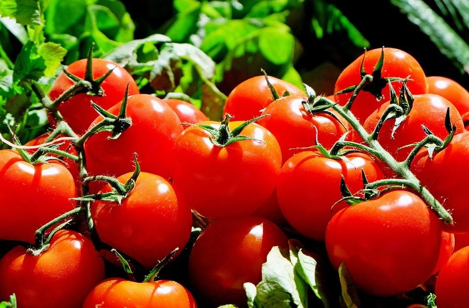 Бизнес выращивание овощей в теплице отзывы