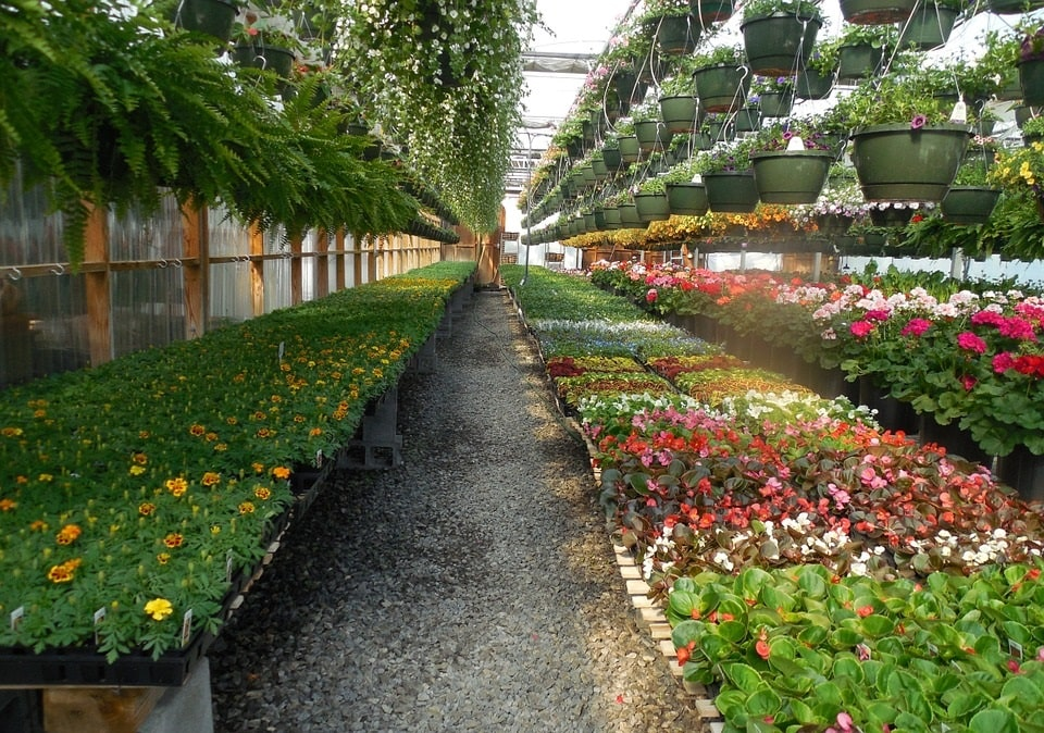 Бизнес на многолетних цветах