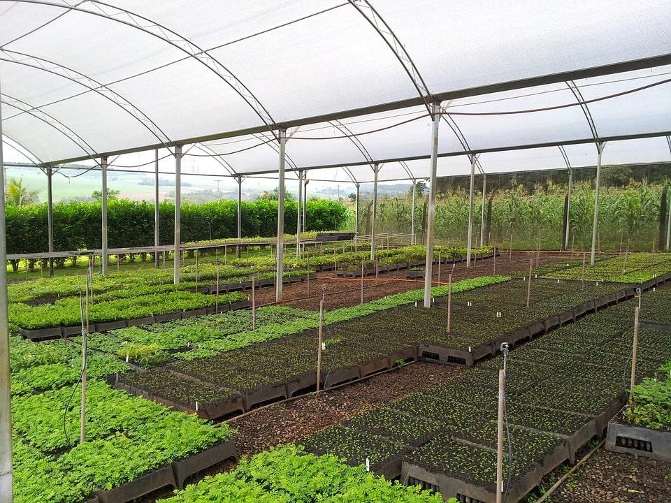 Что нужно для выращивания рассады в домашних условиях