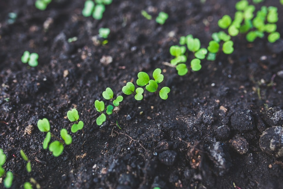 Садим рассаду петуний, огурцов, помидоров и прочего