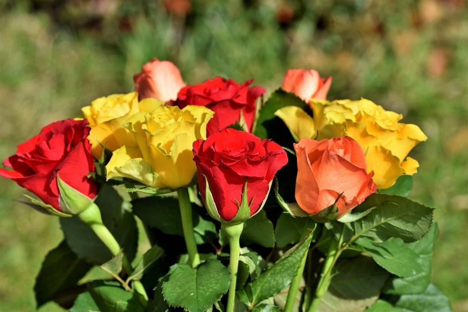 Выращивание роз отзывы предпринимателей