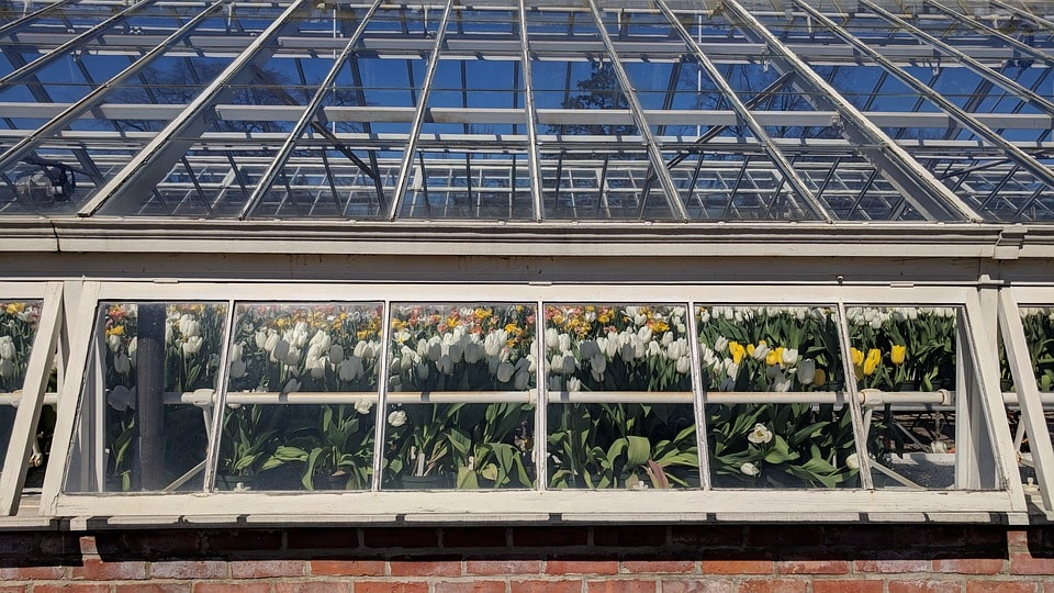 Теплица для выращивания тюльпанов к 8 марта
