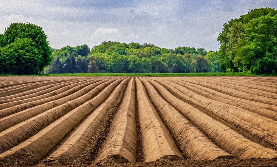 Выращивание овощей – фермерство