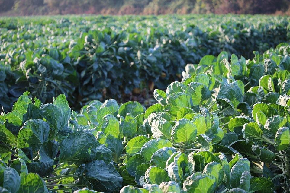 Отзывы об овощеводстве как бизнес
