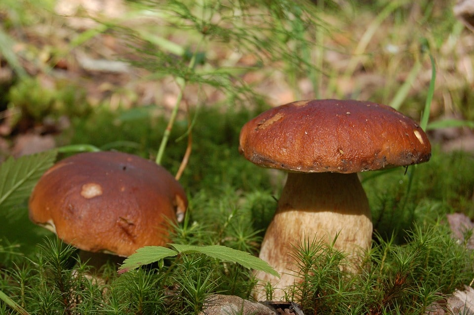 Выращивание грибов как бизнес в 2020 году
