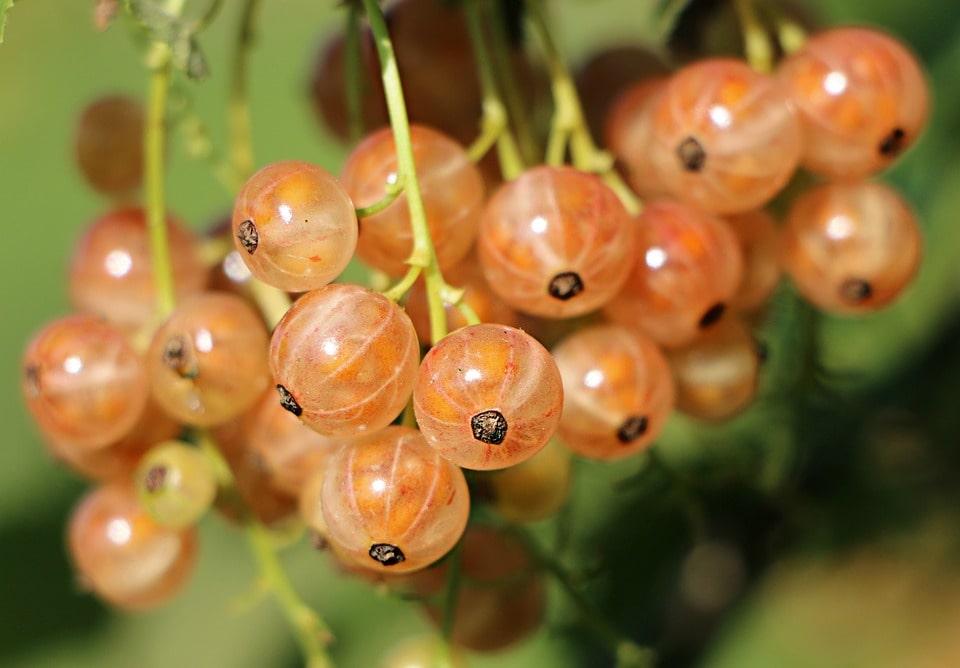 Что можно выращивать в краснодарском крае с выгодой?