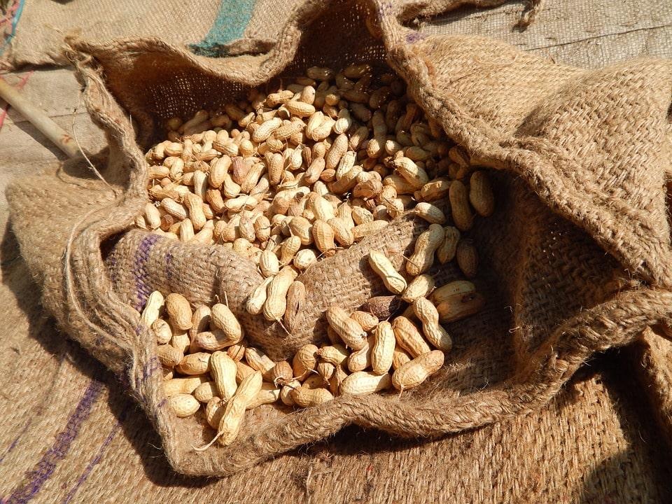 Как вырастить арахис на даче в беларуси