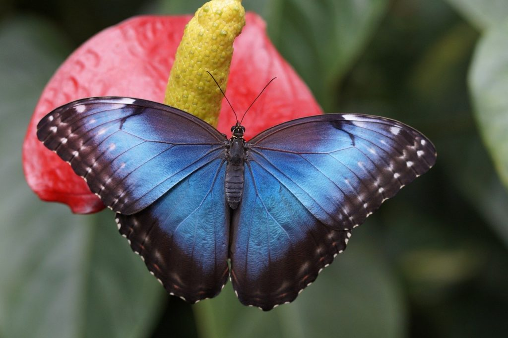 Бизнес-план парка живых тропических бабочек