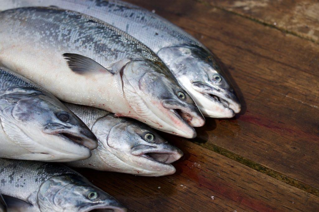 Сбыт лосося
